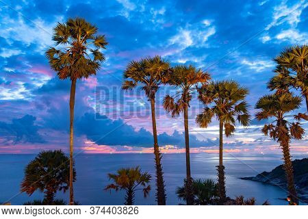 The sugar palm is a symbol of Promthep cape viewpoint. Promthep cape viewpoint is the most popular