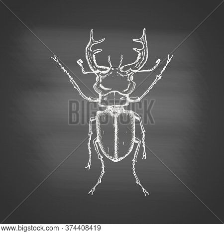 Stag Beetle Chalk Drawing On The Blackboard. Hand Drawn Sketch In Vintage Engraving Style. Insect Ve