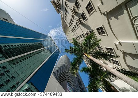 Upward View Highrise Towers In The City And Palm Tree Miami Scene