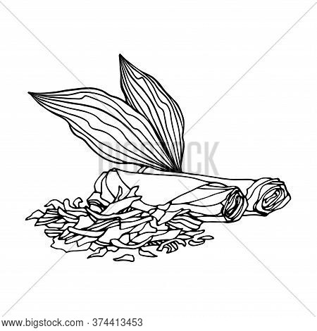 Dried Tobacco Leaves Rolled Into Cigarettes With Shag, Vector Illustration With Black Contour Lines