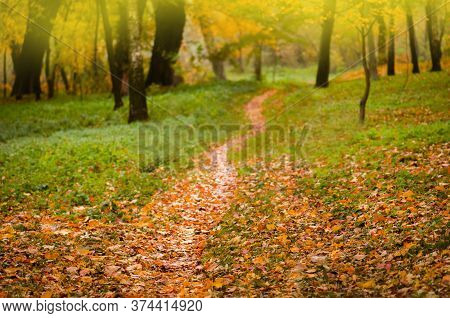 Autumn Forest Trees Leaves And Green Grass. Autumn Leaves Background