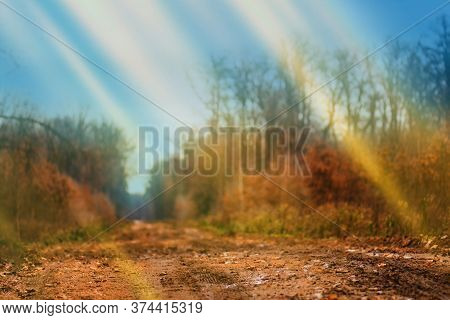 Beautiful Sunset Scenery Of Autumn Forest. Fairy Tale Scenic View