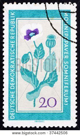 GDR - CIRCA 1960: a stamp printed in GDR shows Poppy, Papaver Somniferum, Medicinal Plant, circa 1960 poster