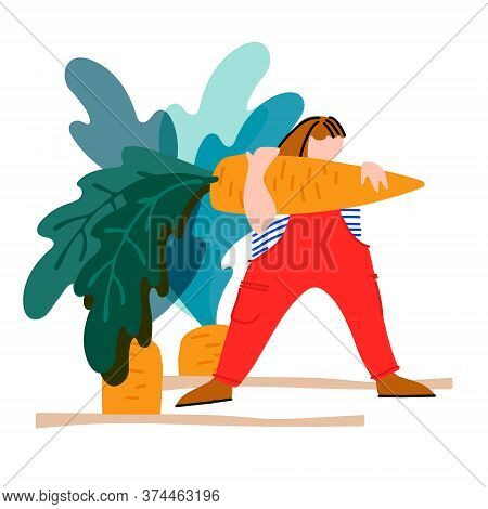 Woman Picking Carrot Vector Illustration. Harvesting Concept. Agritourism, Pick Your Own Concept. Fr