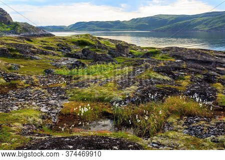 Coastline Of Barents Sea In Northern Polar Summer. Arctic Ocean, Kola Peninsula, Russia