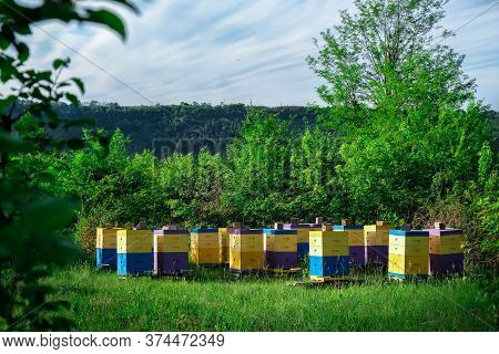 Eco-friendly Apiary. An Apiary Where Ecologically Clean Honey And Other Beekeeping Products Are Obta