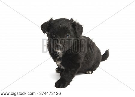 Puppy Little Doggy Isolated On White Background