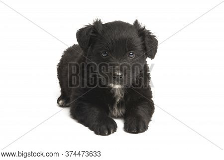 Puppy Doggy Animal Isolated On White Background