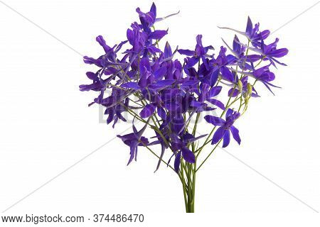 Forking Larkspur Flower Isolated On White Background