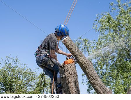 A Tree Surgeon Or Arborist Cutting A Tree Stem Using A Chainsaw.