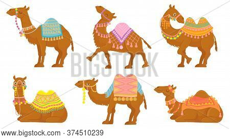 Cartoon Camel. Funny Desert Animals With Saddle. Camels Vector Isolated Characters Set. Wild And Dom