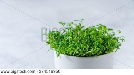 Close Up Watercress Microgreens On Light Background