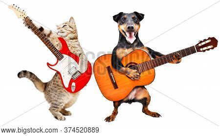 The Cat Plays The Electric Guitar And The Dog Plays The Acoustic Guitar Isolated On White Background