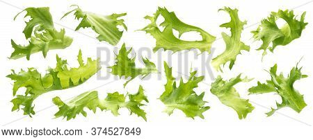 Mix Of Frisee Leaves Isolated On White Background