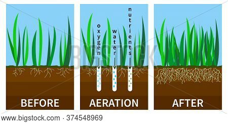 Vector Illustration Of Stages Lawn Aeration. Before And After Steps. Concept Of Lawn Grass Care, Gar