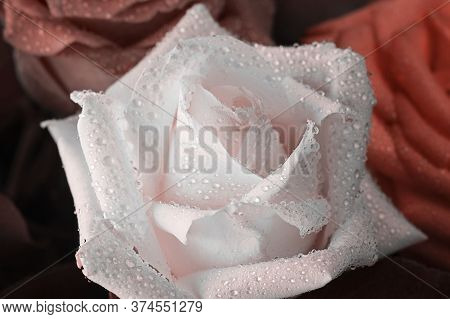 Close Up Of White Rose With Water Drops Of With Other Defocused Flowers On The Background. Horizonta