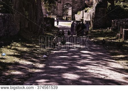 Rajasthan, India - October 06, 2012: A Pathway With Monkey Langoors Surrounding Abandoned Cursed Rui