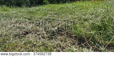 Hillside With Mowed Grass. Urban Economy. Lawn Mowing. The Grass Withered And Became Hay