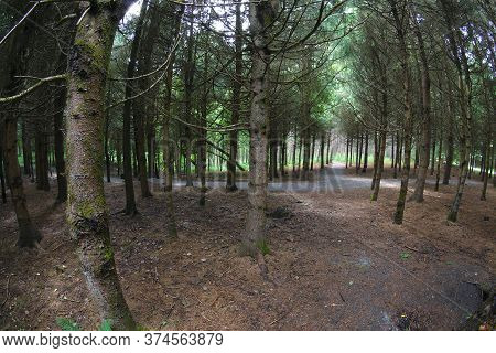 Forest Trees Nature Path Pine Wood Landscape
