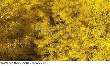 Aspen valley in Colorado during Autumn 3d rendering