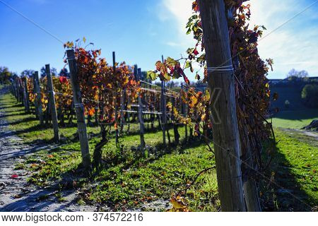Piedmontese Langhe Landscapes In Italy: The Vineyards That Produce The Best Wine In The World