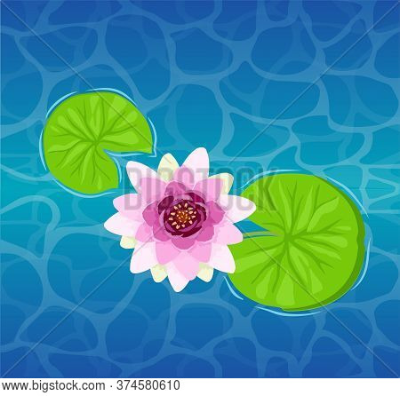 Beautiful Lotus Flower On The Water Close-up. Beautiful Lily Lotus. Illustration Of A Lily Or Lotus