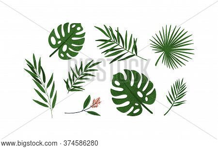 Set Of Different Tropical Green Leaves Or Branches Vector Flat Illustration. Collection Of Natural E