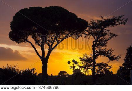 Silhouette Of Italian Stone Pine Oder Umbrella Pine In Tuscany - Tuscany, Italy