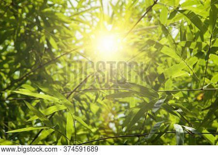 Growing  Leaf Bamboo Frame In Forest Or Texture Background. Green Nature, Green Energy And World For