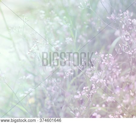 Beautiful Blur Grass Flower In Cloudy Morning