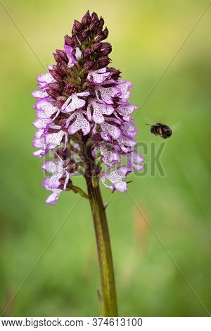 Beautiful Orchid Flower With Insect. Orchid Background. Colorful Orchid. Orchid In Nature.