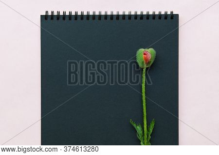 Notepad For Notes And Bud Of A Poppy Flower Similar To A Female Organ Vagina. Concept Of Female Inti
