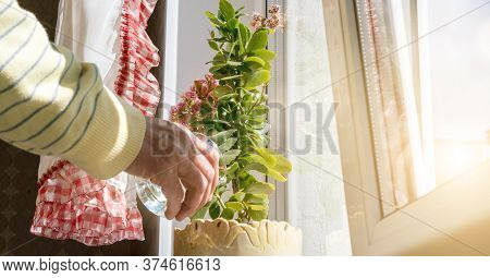Old Person In Yellow Pullover Hand Waters Green Pot Plant Holding Glass Under Bright Summer Sunlight