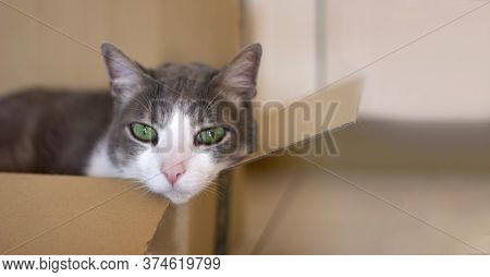 A Sad Beautiful Domestic Gray-white Cat With Green Eyes Lies Lonely In A Cardboard Box Indoors. Cat