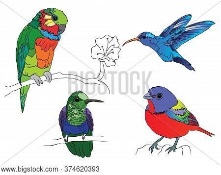 bright tropical birds, hand-drawn. with a hummingbird, a parrot and others. hummingbird in flight. as well as twigs and a flower