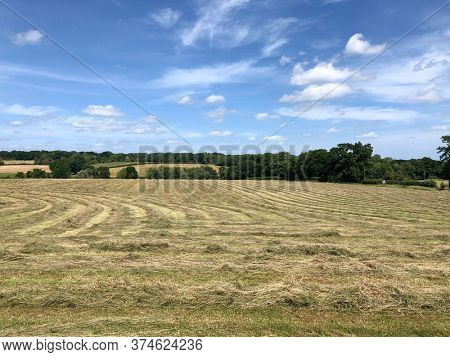 Cut grass drying in lines to make hay animal feed in a rural countryside farm field, West Berkshire, UK