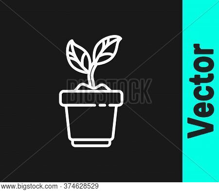 White Line Plant In Pot Icon Isolated On Black Background. Plant Growing In A Pot. Potted Plant Sign