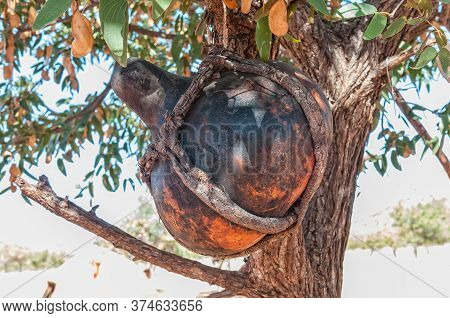 A Traditional Hollow Gourd, For Storing Sour Milk, Hanging In A Tree In A Himba Village Near Epupa