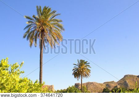 Warm Image With Lush Vegetation And Palm Trees For A Relaxing Vacation