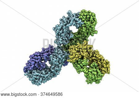 Molecular Model Of Pembrolizumab, A Humanized Antibody Used In Immunotherapy Of Cancer, 3d Illustrat