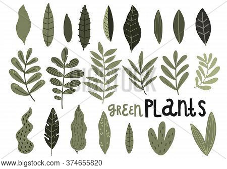 Set Of Green Leaves Of Plants And Branches, Vector Hand Drawing Pattern Design