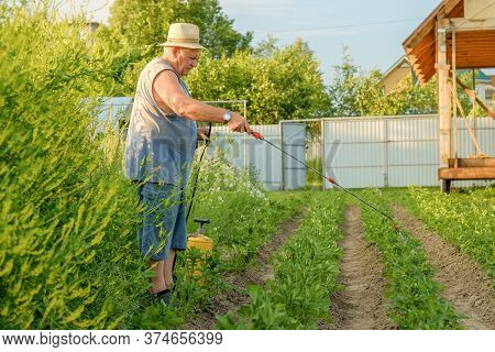 An Elderly Man In A Hat Sprays An Insecticide On The Tops Of Potatoes. The Fight Against The Colorad