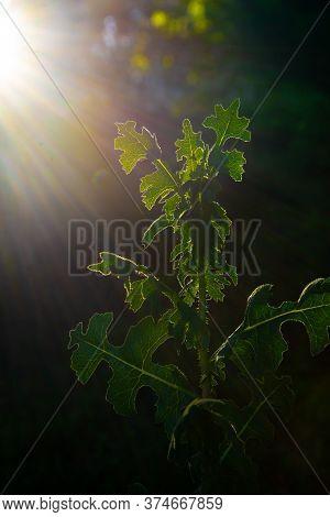 Backlight Summer Garden Environment Nature Plant Spring