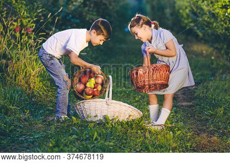 Photo Of Little Sister And Brother Gathering Apples For Apple Pie, On Sunny Autumn Weekend.