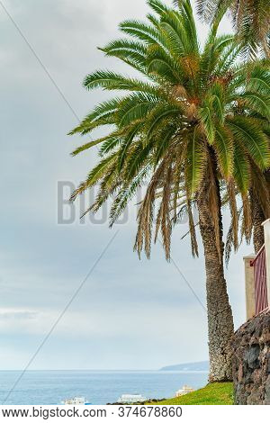 Beautiful Green Palm Tree On A Cliff Against The Blue Sunny Sky Background. Puerto De La Cruz, Tener