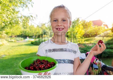 Cute Adorable Caucasian Blond Litlle School Girl Enjoy Eating Healthy Ripe Tasty Juicy Dark Red Cher