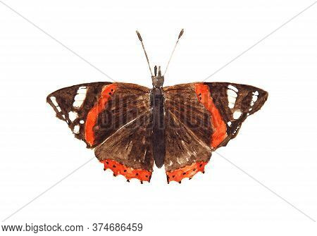 Watercolor Drawing Of The Butterfly Red Admiral Isolated On White Background. Handmade Illustration