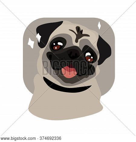 Charming, Cute Beige Pug Puppy On A White Background. Smiling With His Tongue.pets, Dog Lovers, Anim