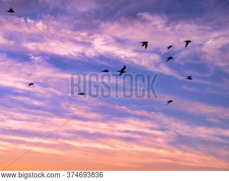 Beautiful Sky On Sunset Or Sunrise With Flying Birdsl. Background Birds Flying In The Cloudy Sunset