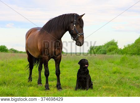 Two Pets Are In Outdoors. One Horse And One Dog Are Standing In The Countryside.